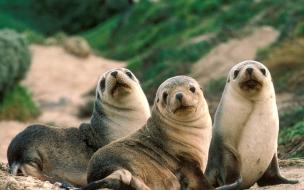 Fondo de pantalla lobos marinos