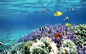 Fondo de pantalla arrecife