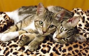 Fondo de pantalla gatos