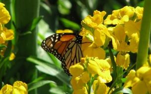 Fondo de pantalla mariposa