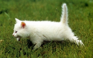 Fondo de pantalla gato huyendo