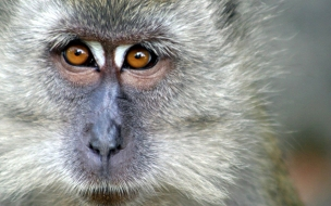 Fondo de pantalla mono observando