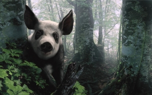 Fondo de pantalla chancho panda