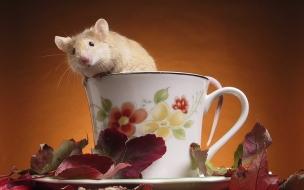 Fondo de pantalla rata en una taza de cafe