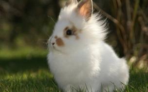 Fondo de pantalla conejo tierno
