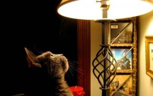 Fondo de pantalla gato mirando lampara