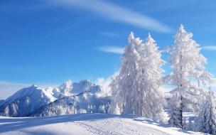 Fondos hd paisajes nevados y arboles blancos