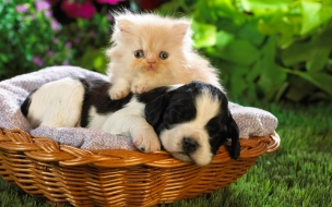 Fondo de pantalla gato encima de un perro