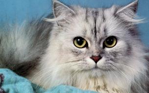 Fondo de pantalla mirada de gato malo