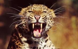 Fondo de pantalla jaguar atacando