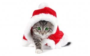 Fondo de pantalla gatito vestido de papanoel