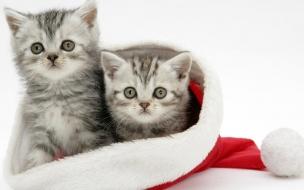 Fondos hd gatitos metidos en gorro navideño