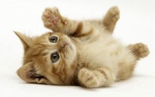 Fondo de pantalla gato jugueton