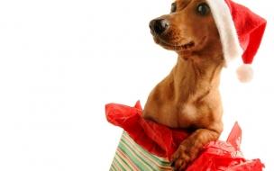 Fondos hd perrito como regalo