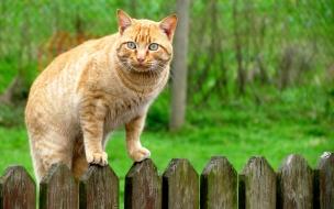 Fondo de pantalla gato pasando una cerca
