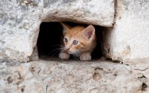 Fondo de pantalla gato en cueva