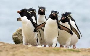 Fondo de pantalla de pinguinos graciosos