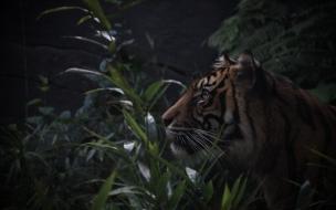 Fondo de pantalla tigre queriendo atacar