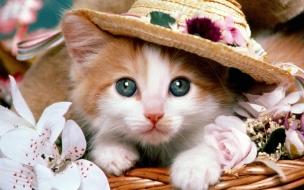 Fondo de pantalla gato con sombrero