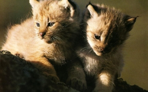Cute animals cats wallpapers