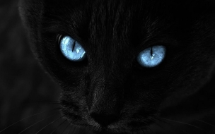 Black Cat Hd