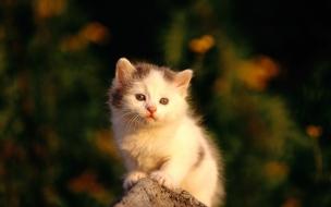 Fondo de pantalla gatito bebe