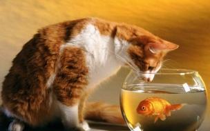 Fondo de pantalla gato mirando a un pez