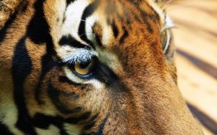 Fondo de pantalla ojos de tigre
