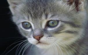 Fondo de pantalla gatito gris hermoso