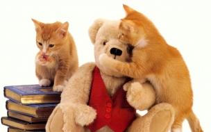 Fondo de pantalla gatos con peluche