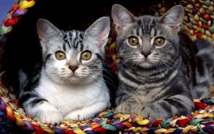 Fondo de pantalla gatos descansando