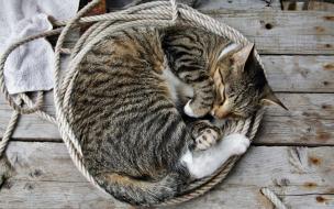 Fondo de pantalla gato durmiendo en una soga