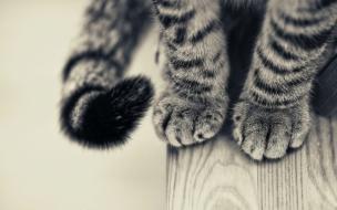 Fondo de pantalla patitas de gatos