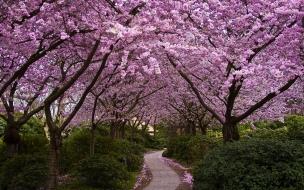 Arbol con flores lilas