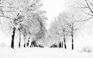 Arboles llenos de nieve