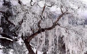 Arbol lleno de nieve