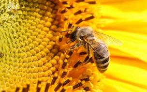 Abeja sacando el nectar