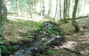 Bosque con riachuelo seco