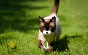 Fondo de pantalla gatito en campo