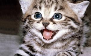 Fondo de pantalla gato sonriente