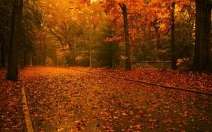 Camino en otoño