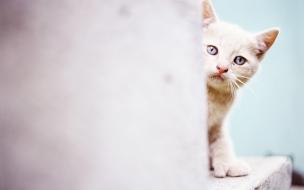 Fondo de pantalla gato escondido