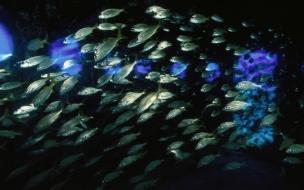 Cardumen de peces
