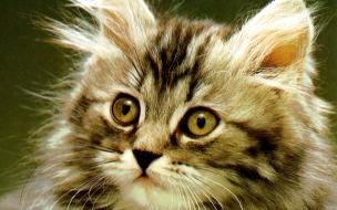 Fondo de pantalla gato pelon