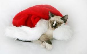 Fondo de pantalla gato con gorrito navideño