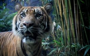 Fondo de pantalla tigre asustado
