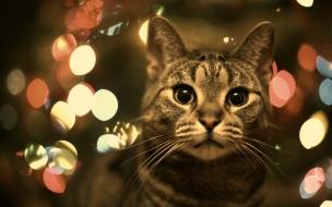 Fondo de pantalla gato con luces