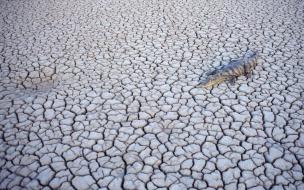 Cocodrilo en desierto arido