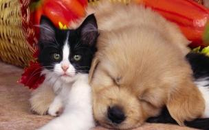Fondo de pantalla gato debajo de un perro