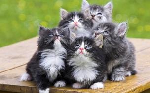 Fondo de pantalla gatos viendo al cielo